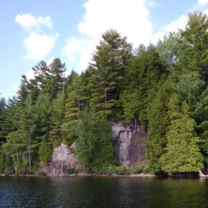 trees grow out of the Canadian Shield